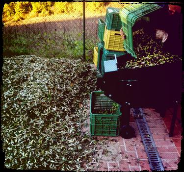 Defogliatore olive